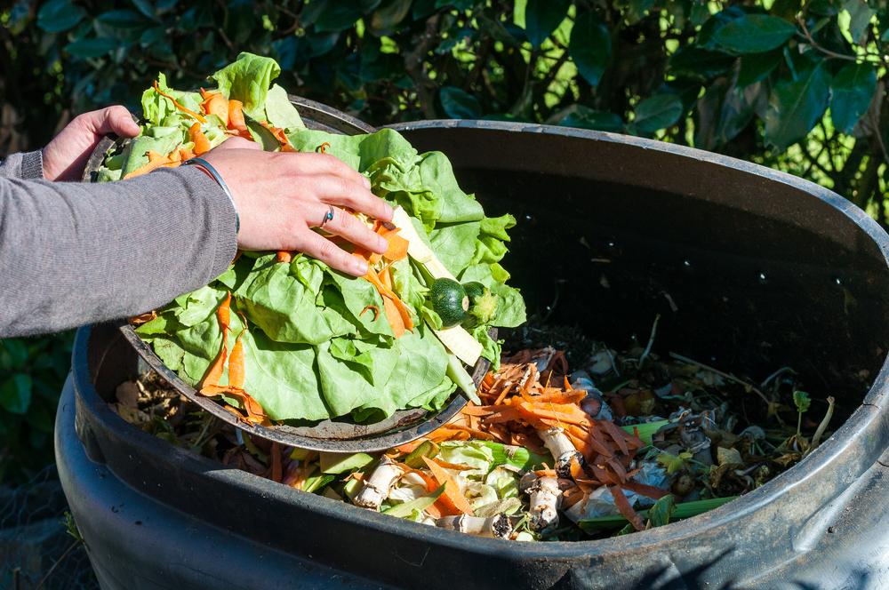 gaspillage-des-legumes